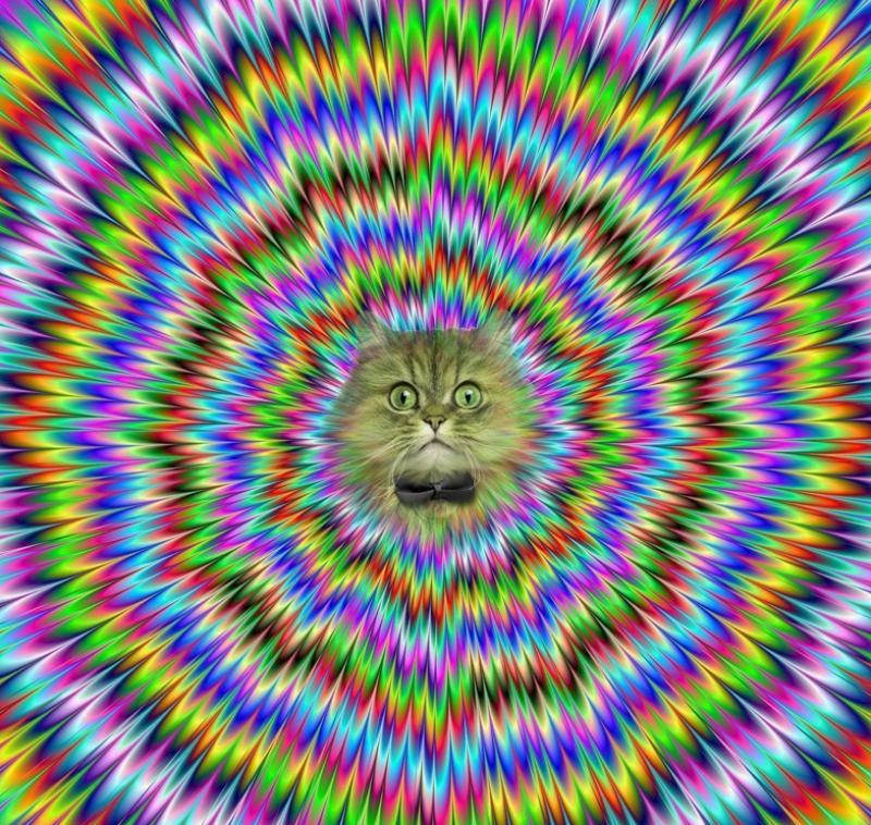 Google Image Chat-magique