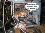 chats-et-souris