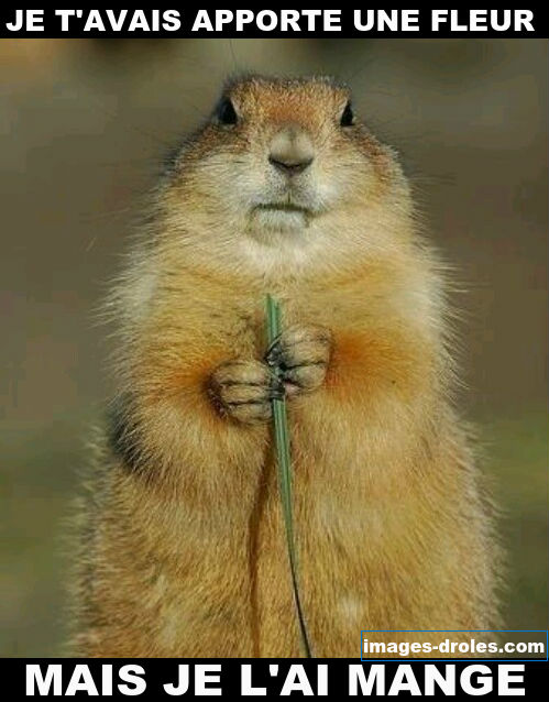 image drole ecureuil