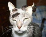chat-qui-a-des-souris-sur-la-tete-