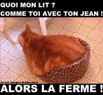 chat-trop-gros-pantere.jpg