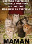 chatte-folle-chatons-drole.jpg