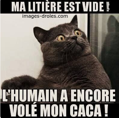humour-chat.jpg