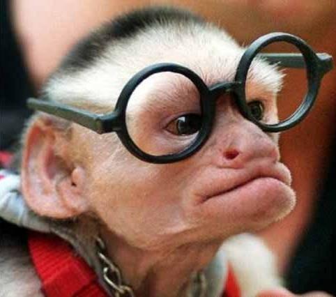 image drole lunettes