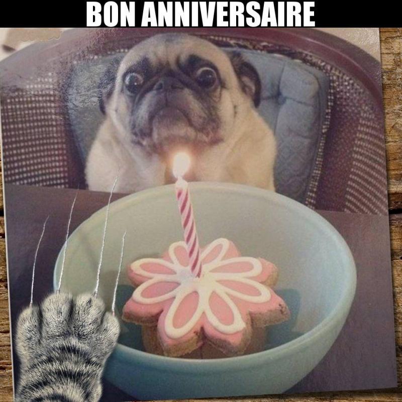 anniversaire de mon chien