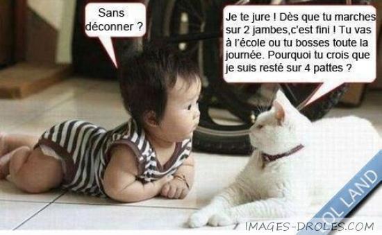 Häufig Chat explique à bébé - Image drôle - Société PT03