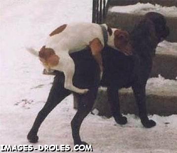 follando con perros
