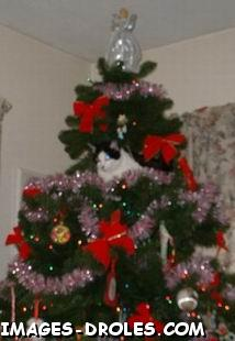 Chat Sapin Noel Image Drole Animaux