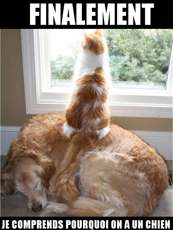 photo drole de chien et chat