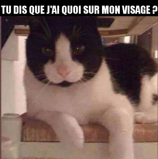 Chat Marrant Image Drole Animaux