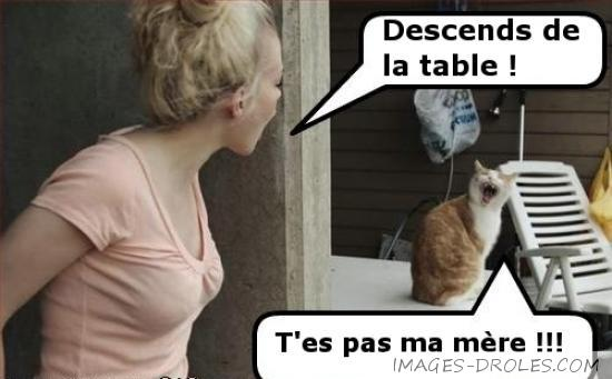 chat-vraie-mere.jpg