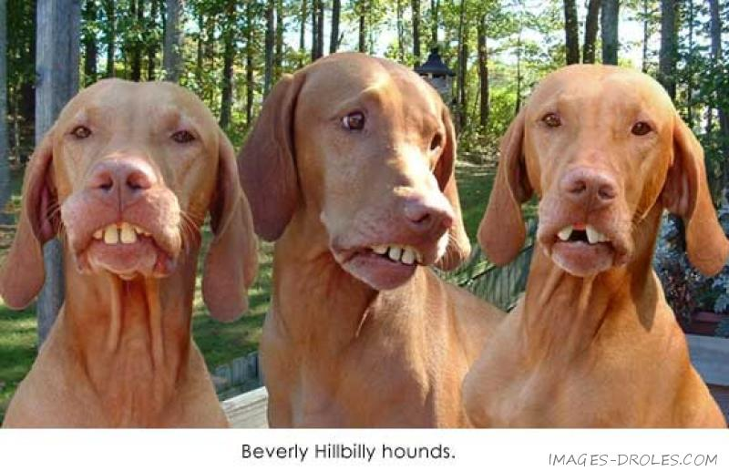 Drôle de dents - 18305 hits