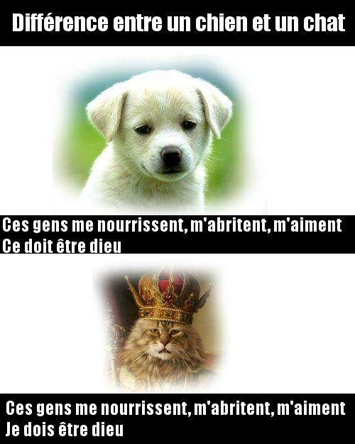 La Diff Rence Entre Chien Et Chat R V L E Image Dr Le
