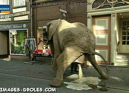 Elephant  Image drôle  Animaux