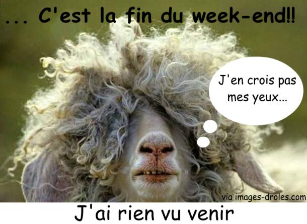 Fin Du Week End Deja Image Drole Animaux