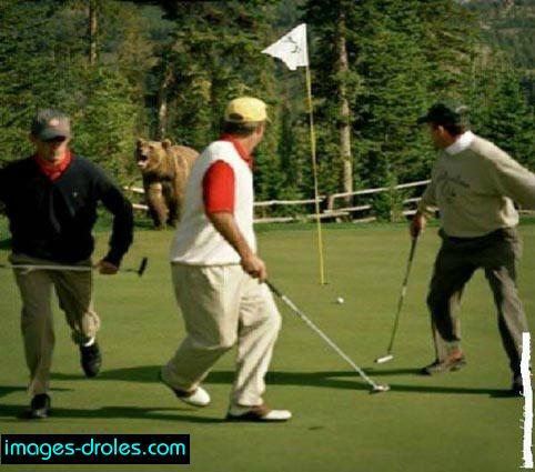 ours au golf image dr le sport. Black Bedroom Furniture Sets. Home Design Ideas
