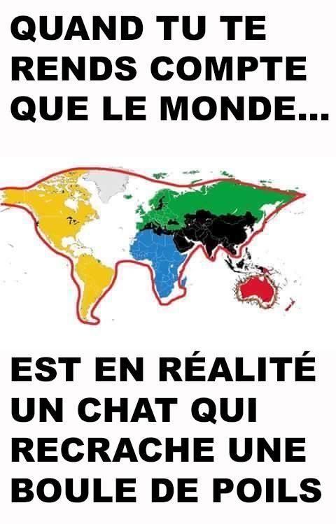 humour-chat-monde.jpg