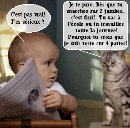 humour-chats-.jpg