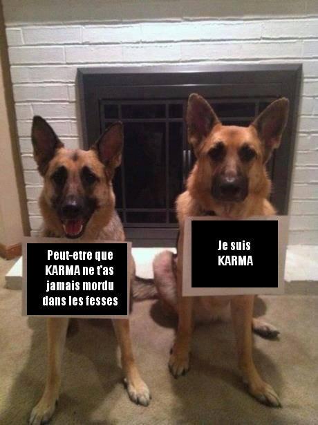 Denonciation De Chiens Image Drole Animaux