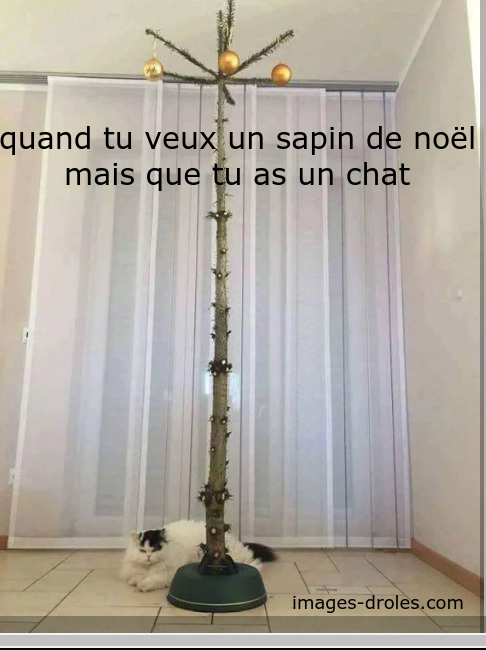 image-drole-chat-0.jpg