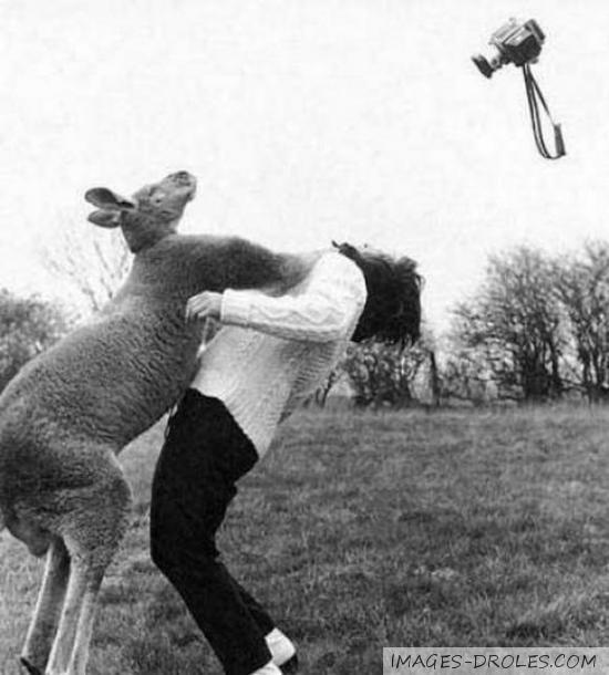 image drole kangourou