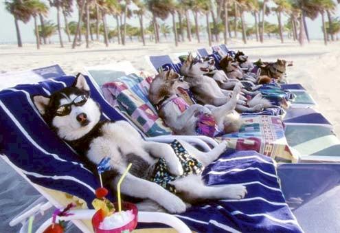 Résultat d'images pour photos drôles d'animaux