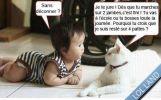 chat-explique-a-bebe