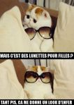chat-lunettes-soleil.jpg
