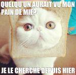 chat-pain-de-mie