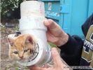 chaton-dans-tuyau-pvc