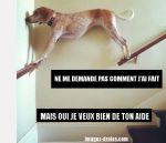 chien-bizarre