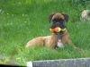 chien-qui-mord-3-balles