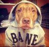 le-chien-le-plus-patient-du-monde