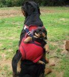 maman-chien-et-porte-bebe