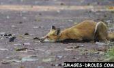 renard-vs-souris